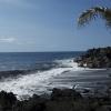 Ocean Palm
