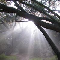 SacredLomi com ~Advanced Lomi • Sacred Lomi® Retreat